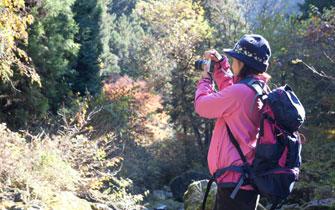 金華山を登りながらの紅葉もグッドです!