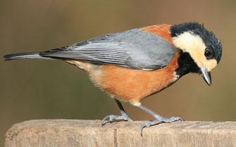 小鳥のさえずりで春を感じる!