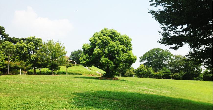 よく晴れた週末には緑豊かな公園で。ba001_img37
