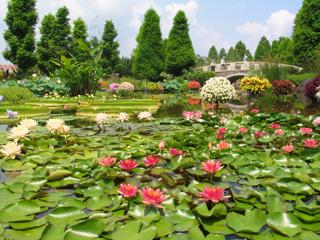水生植物公園みずなの森
