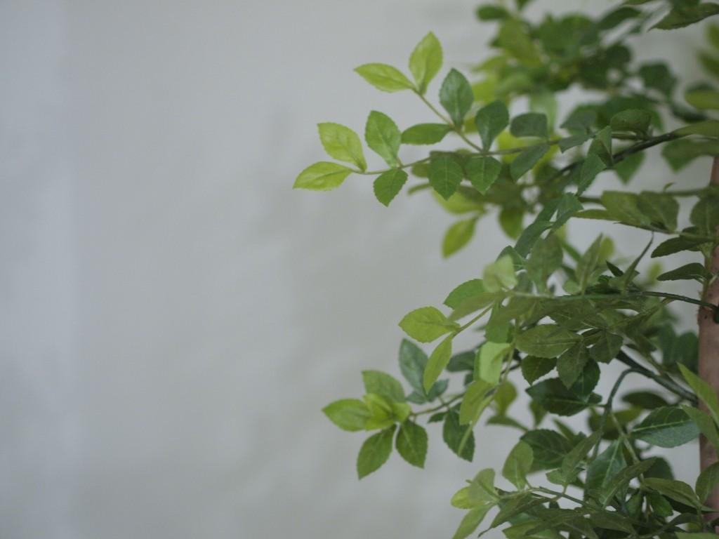 広いLDKなので、観葉植物を置いても邪魔しません。