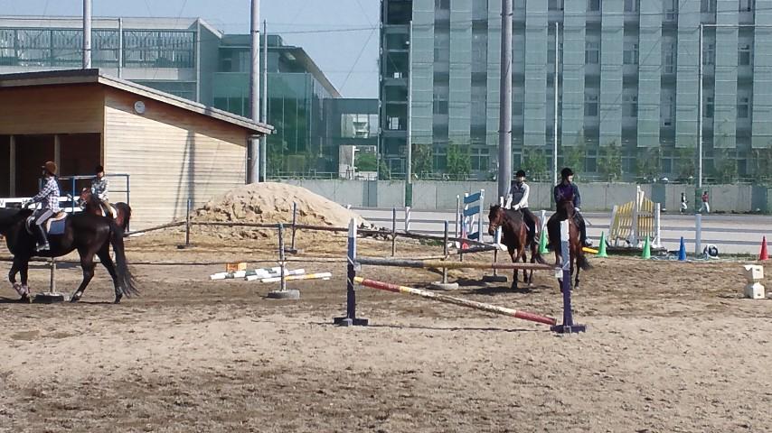 瑞穂運動場での乗馬の練習風景_DSC_0003