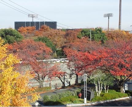 秋は紅葉を楽しみ