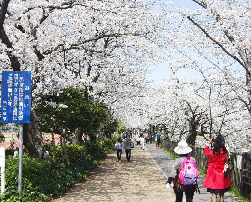 桜が満開のときの様子