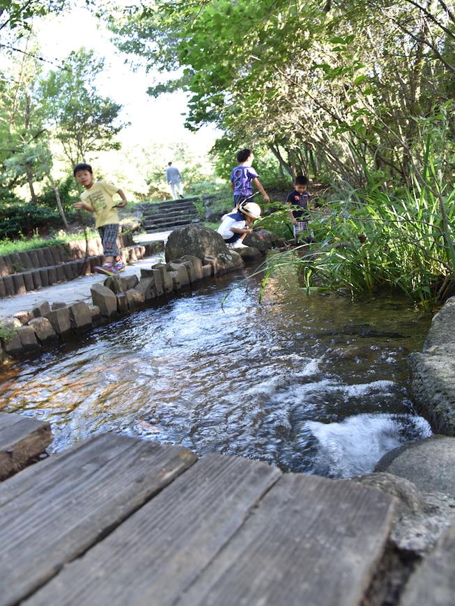 川遊びをする子ども達_DSC_3683