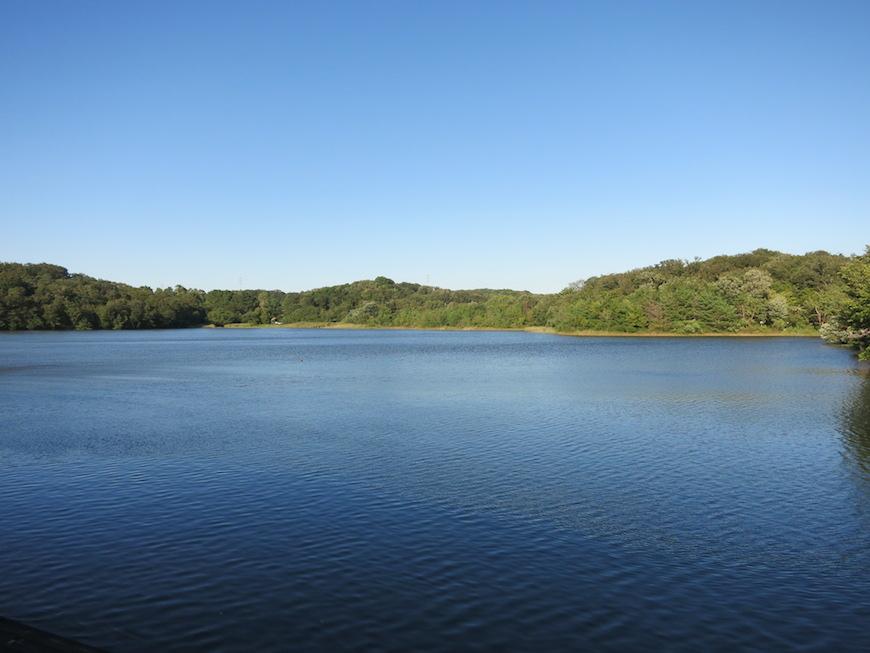 小幡緑地公園の緑ケ池_名古屋市内とは思えない自然豊かな風景_IMG_3471