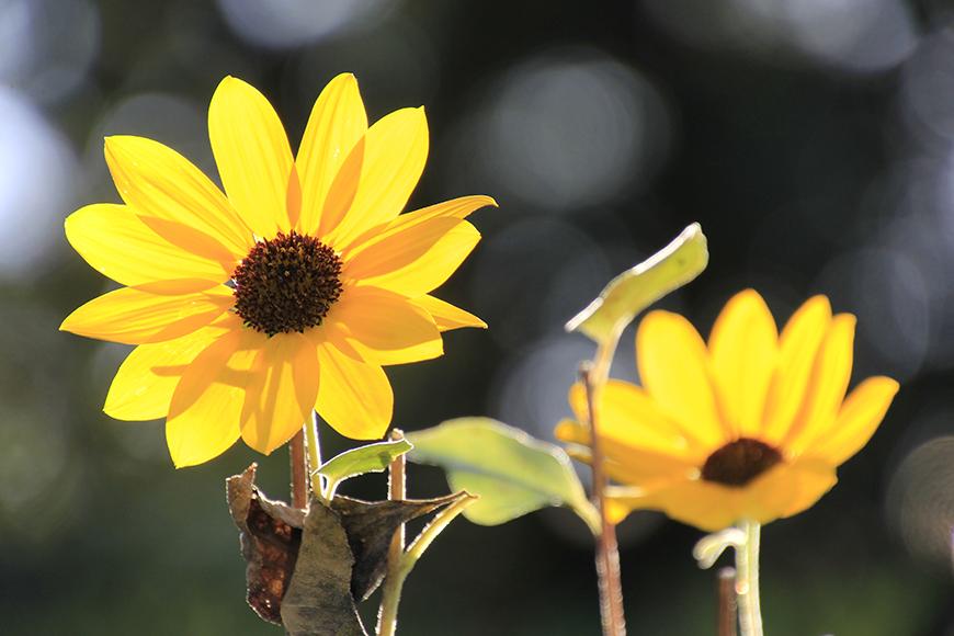秋の心地よい時間はあっと言う間に過ぎて行きます_MG_9698