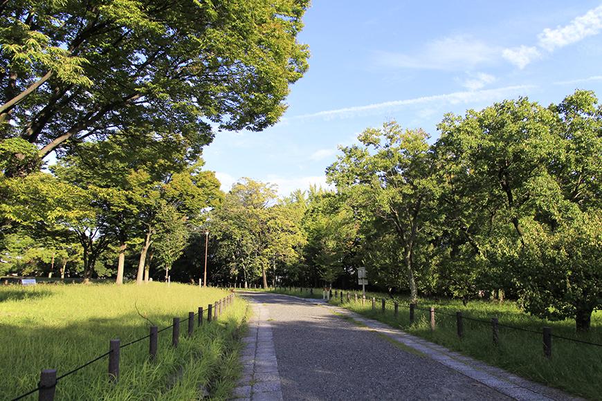 ブラブラお散歩、ウォーキング、ランニング、、、運動するにも良い公園です_MG_9728