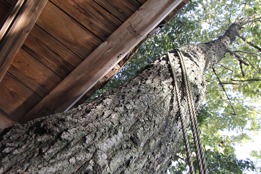 大きな木に寄り添うツリーハウス_MG_9473