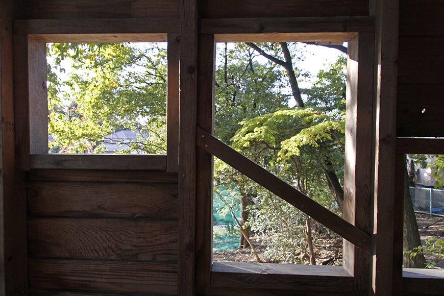ツリーハウスから見える木々_MG_9496