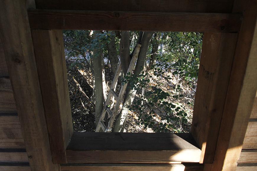 ツリーハウス内から見る木々_MG_9499