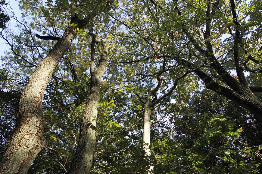 住宅街から一歩入ると大きな木々に囲まれる素敵な環境_MG_9536