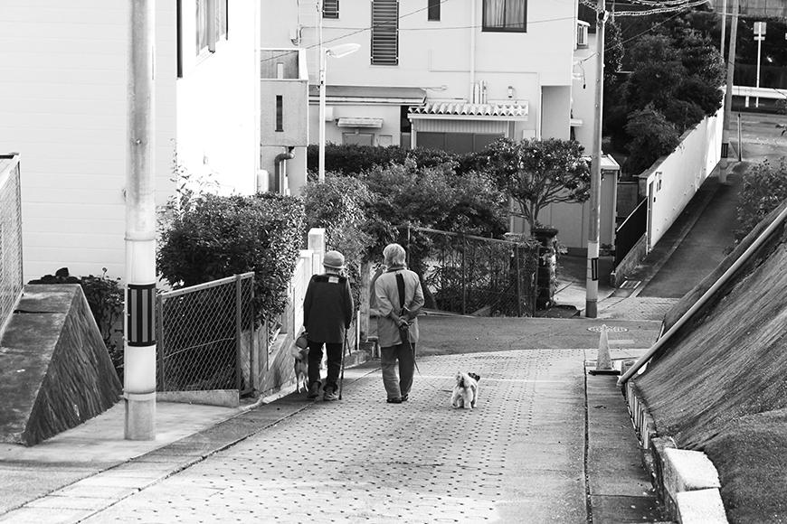 可愛いワンちゃんとお散歩タイム♪_MG_9548
