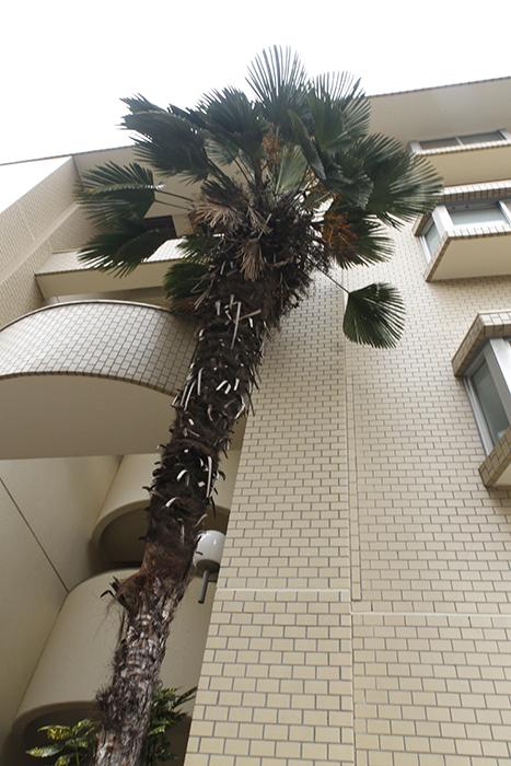 目印の立派なシンボルツリーが、どどーーんと!!_MG_8957