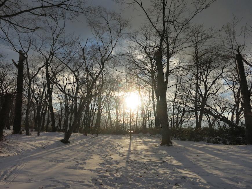 林の合間に昇る朝陽は幻想的_IMG_4066