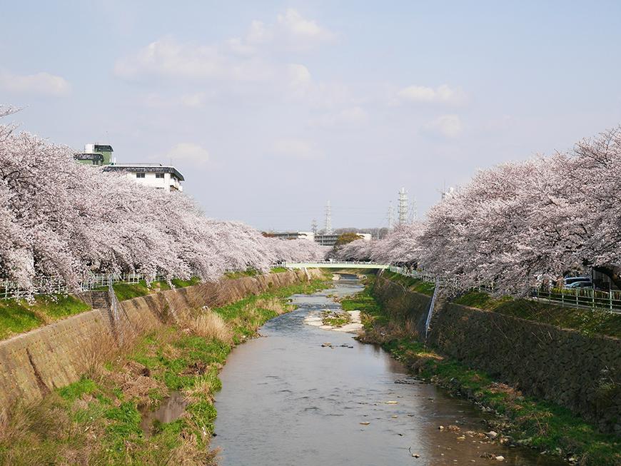 春になれば川沿いの桜が満開!ウォーキングコースです_P1000202s