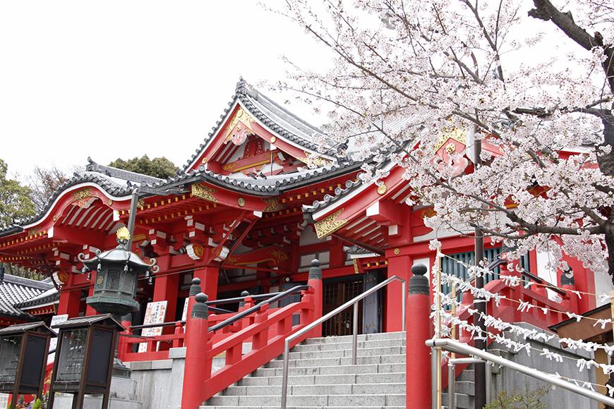 甚目寺観音にて。桜の季節の取材は良いものです・・・しみじみ・・・_MG_6825s