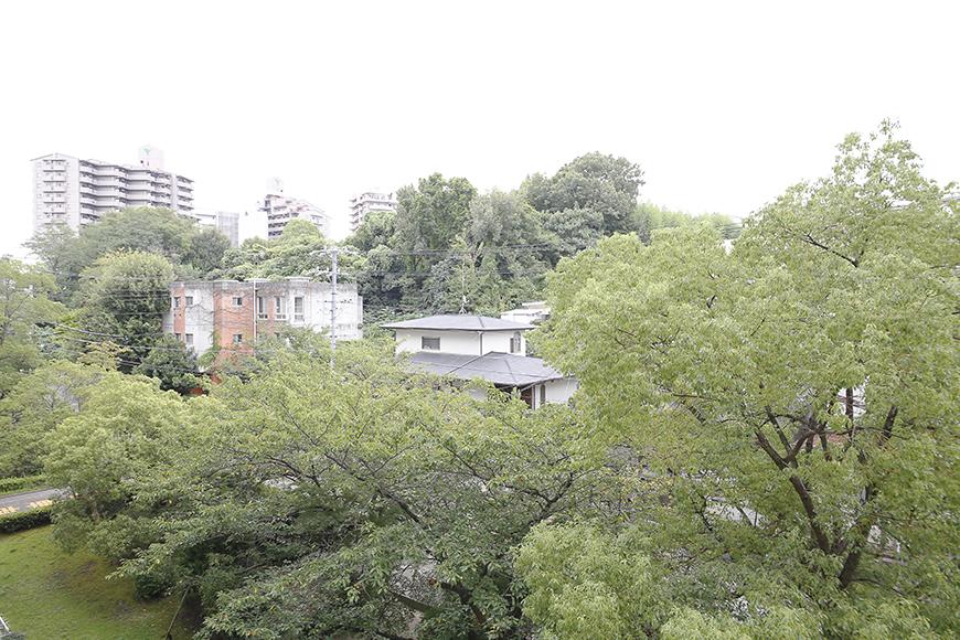 眼下に広がる目に優しい緑・・・  この木は桜だそうで、春の訪れが待ち遠しいですね!_MG_9988