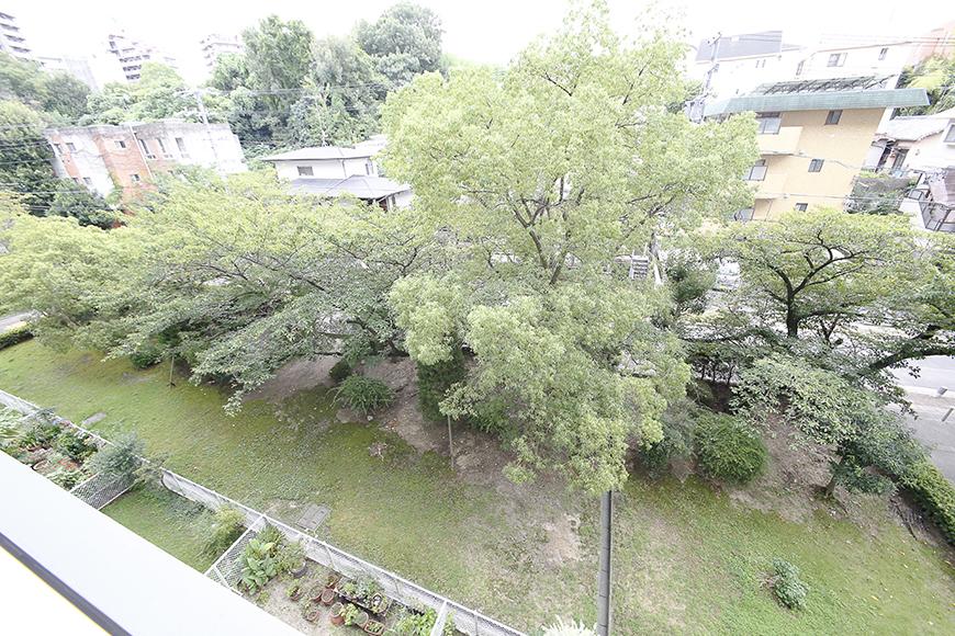 眼下に広がる目に優しい緑・・・  この木は桜だそうで、春の訪れが待ち遠しいですね!_MG_9993