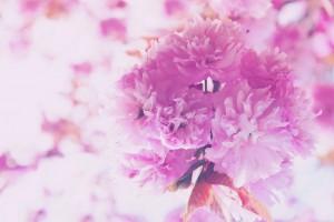 春うらら♡女たちよ♪艶やかに♡目覚めよ♡ トータルビューティスペース&シェアサロン♡ 【Angelique ・Huit(アンジェリケ・ユイット)】