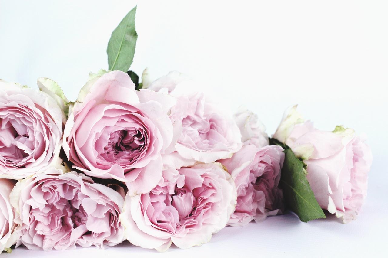 春うらら♡女たちよ♪艶やかに♡目覚めよ♡ トータルビューティスペース&シェアサロン♡pexels-photo-122734