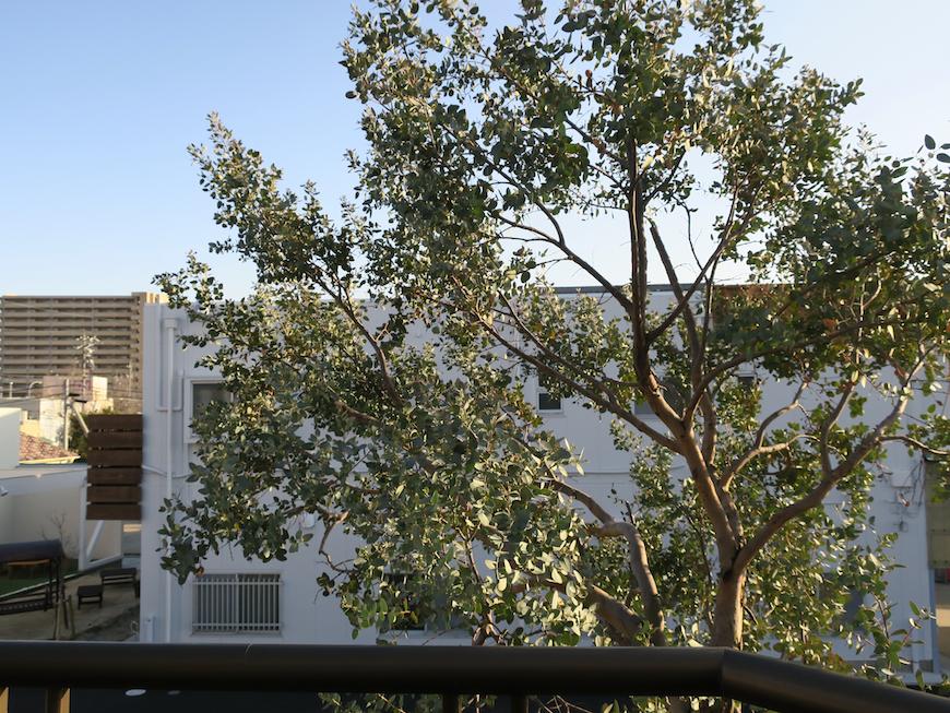 201号室 ユーカリの木が見えて気持ち良いです。ユーカリの木かげにて リッチな暮らしが叶う家。 Ladies only【ユーカリの木の家】