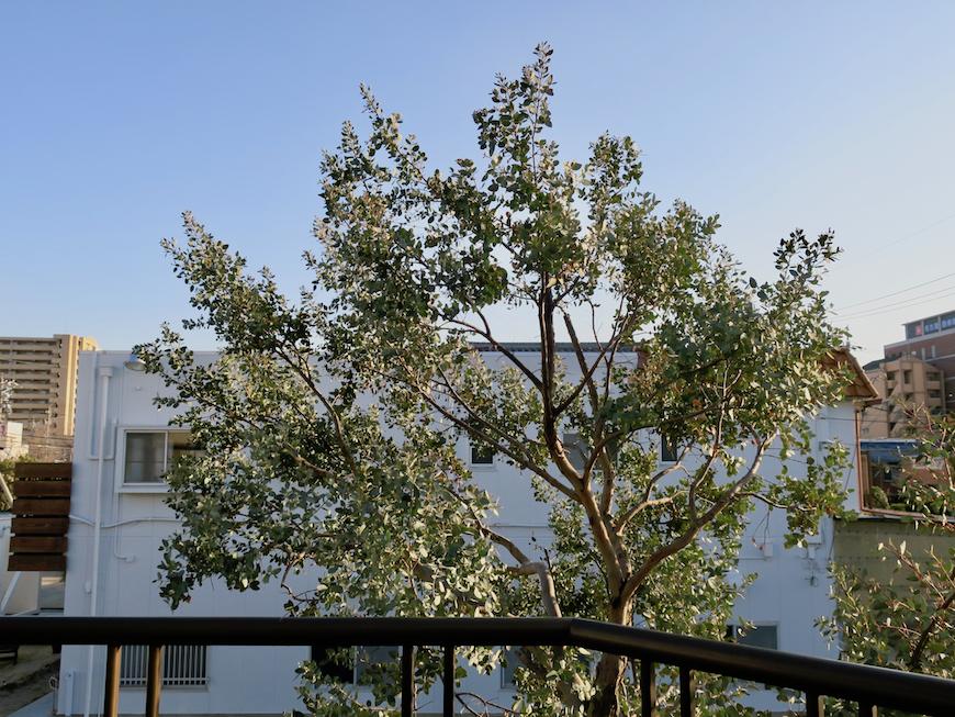 201号室 ユーカリの木を眺めながらあなたは何を思うだろう。。ユーカリの木かげにて リッチな暮らしが叶う家。 Ladies only【ユーカリの木の家】