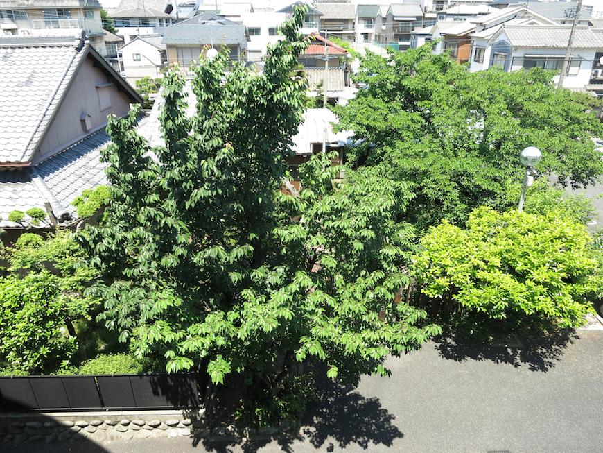 グラン・アルファ 階下を見落とすと鮮やかな緑があります。