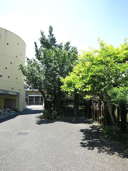 グラン・アルファ 敷地の植物が鮮やかなデザイナーズマンション。