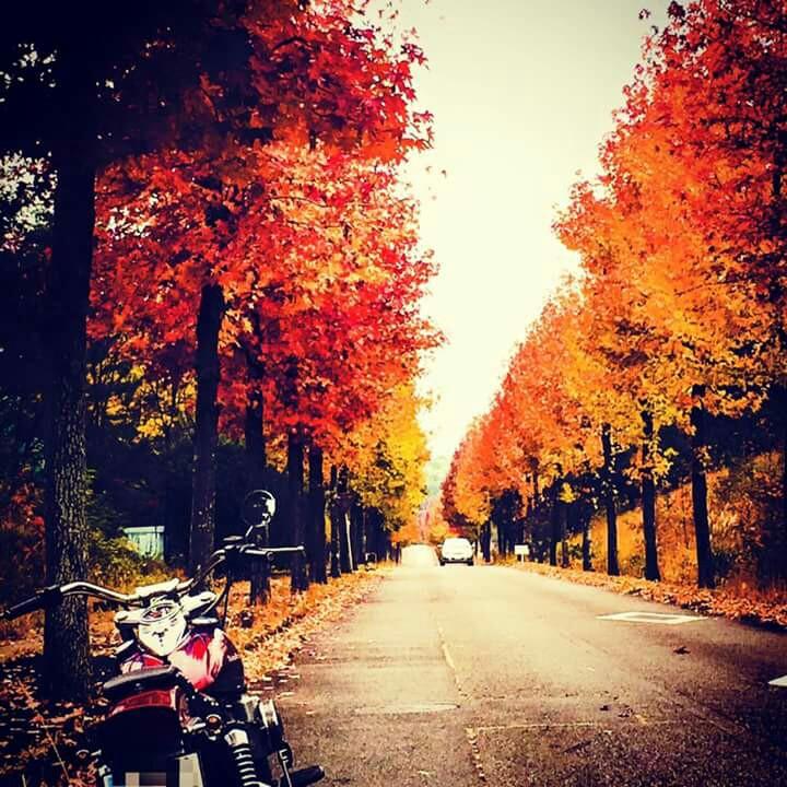 近くの森の中を走って、ふと、美しさのあまり、バイクを停めての撮影(^_^)_Photo_17-09-07-08-57-39.917
