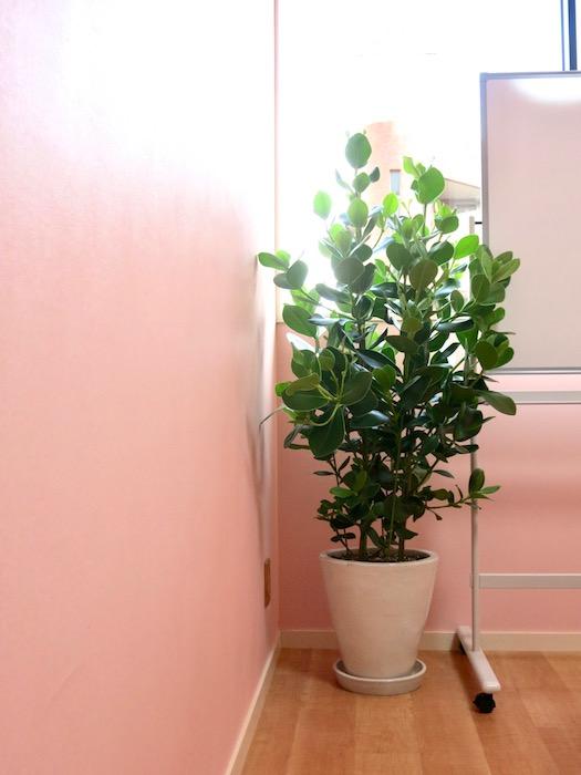 THe PLace  ミニセミナールーム 植物があるお部屋は空気が澄んでいて綺麗です。