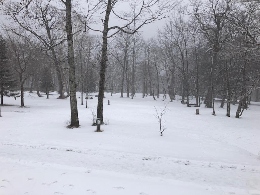 温泉宿の周りには、ピンとはりつめた空気に真っ白で静寂の世界が拡がっています。_IMG_7451