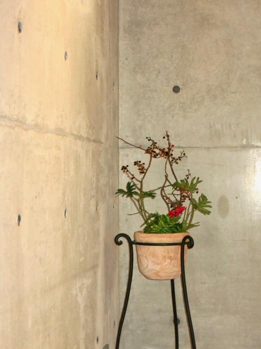 コンクリート打ちっ放しのクールなお部屋。6帖(サンルーム付き)。ARK HOUSE 南館 3A 何もかもが魅力的な創造空間。0