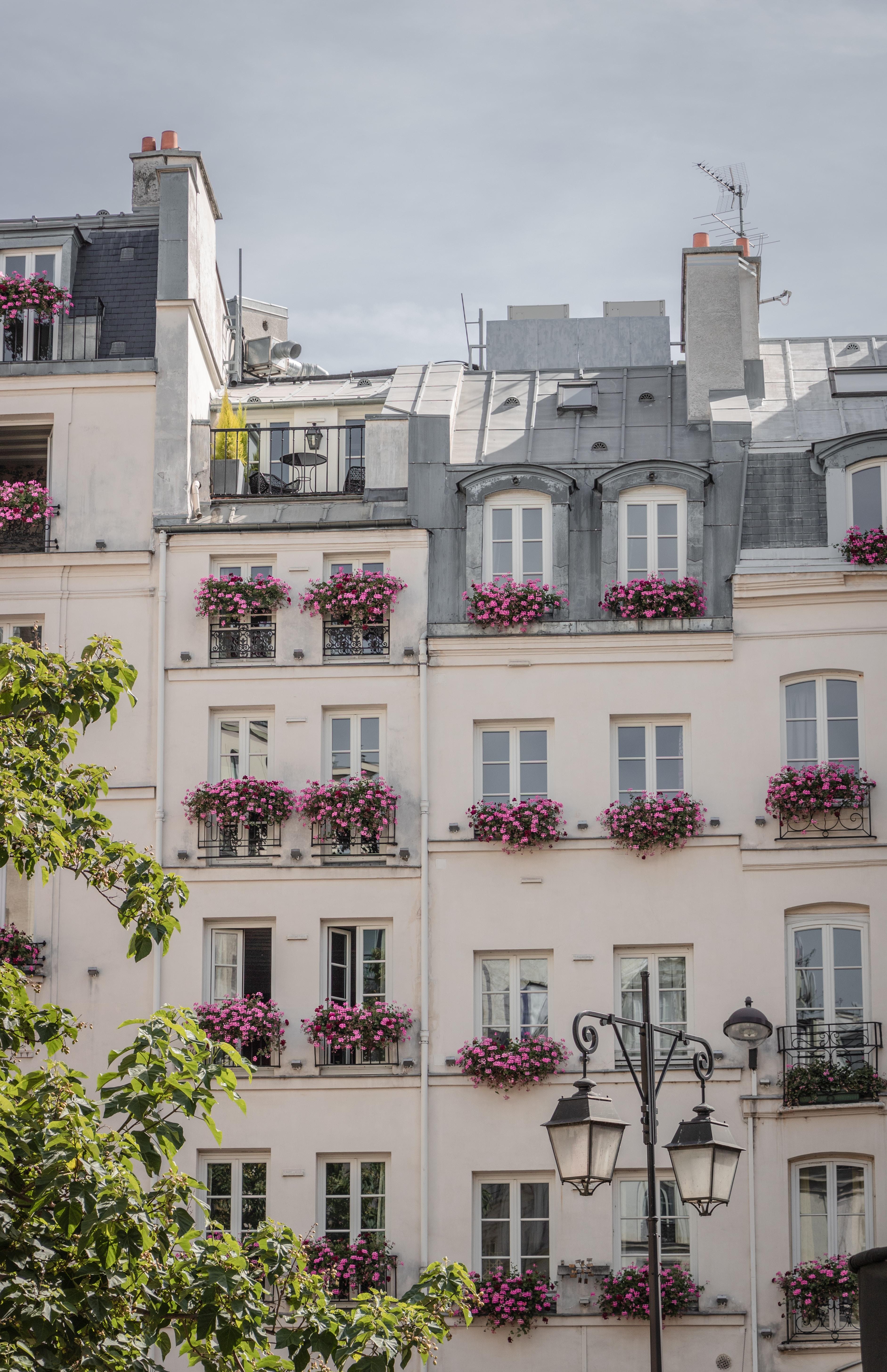 花が溢れる窓たち