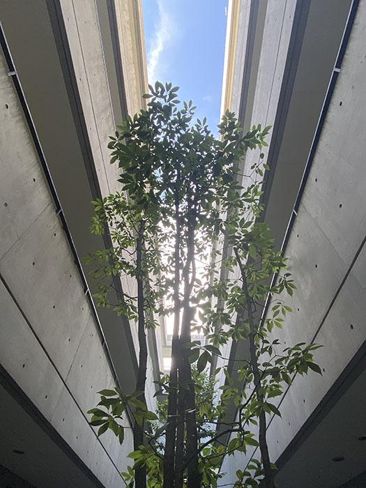 NESPALD EVE 共用部の木